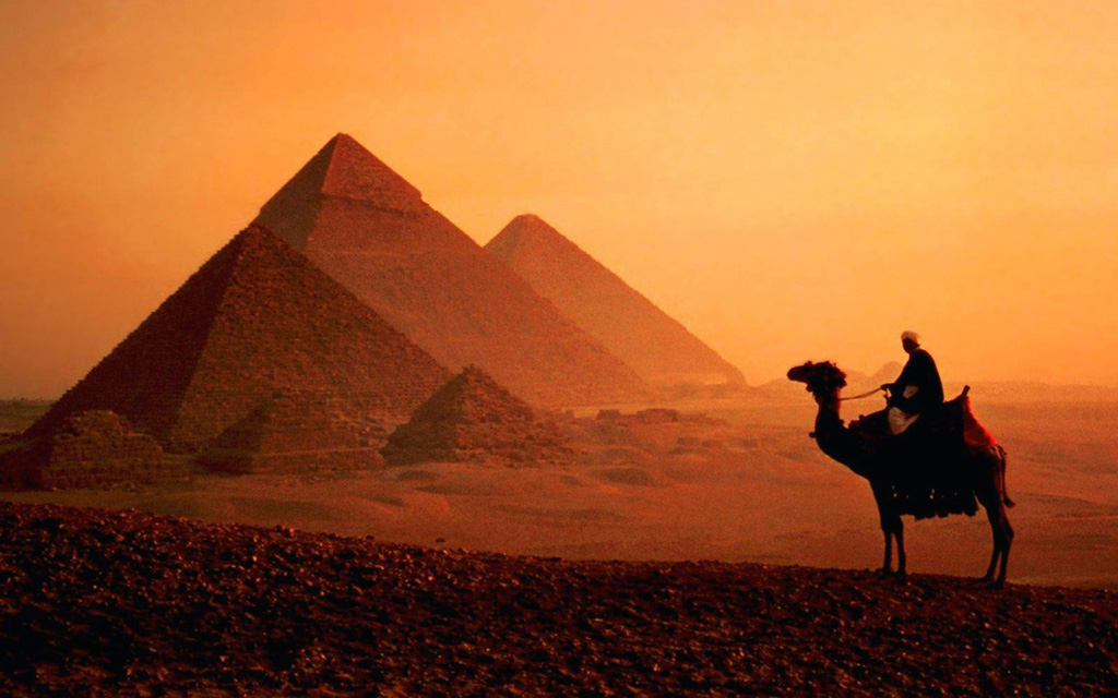 dusk camel by pyramids in cairo, egypt